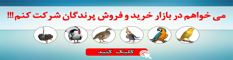 بازار خرید و فروش پرنده مسترت