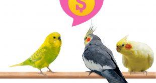 بررسی بازار عروس هلندی و مرغ عشق در آمریکا